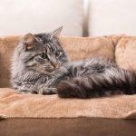 cat in catbed
