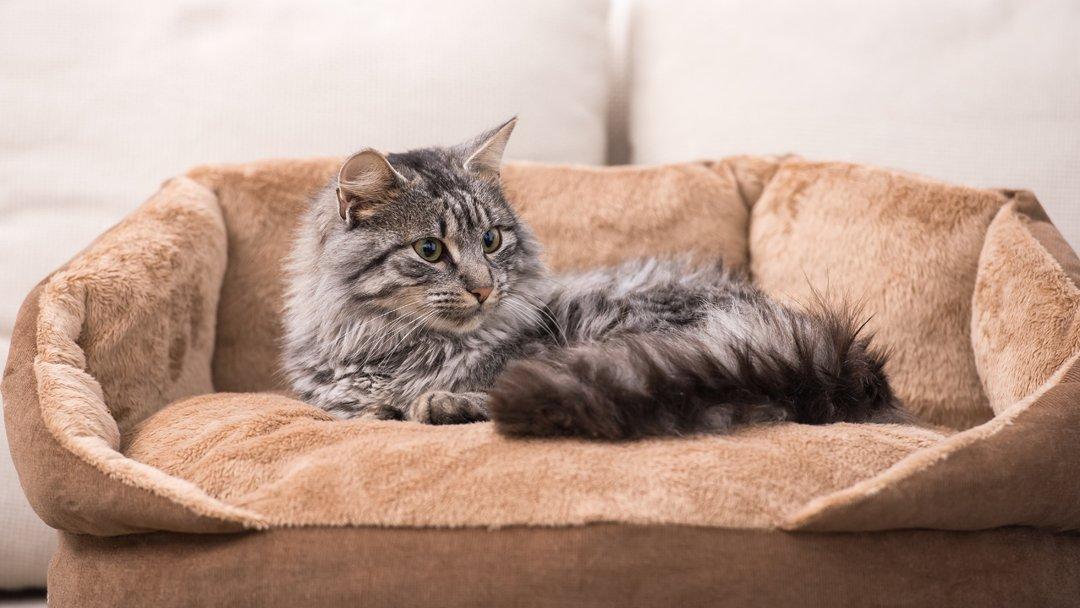 9 Best Cat Beds UK 2018