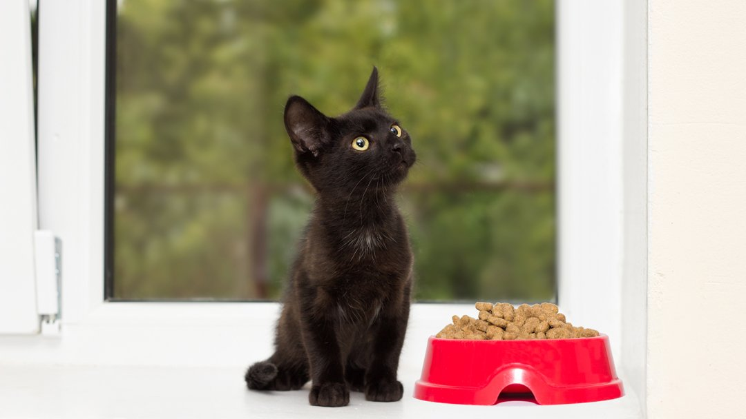 cat with bowl of dry food