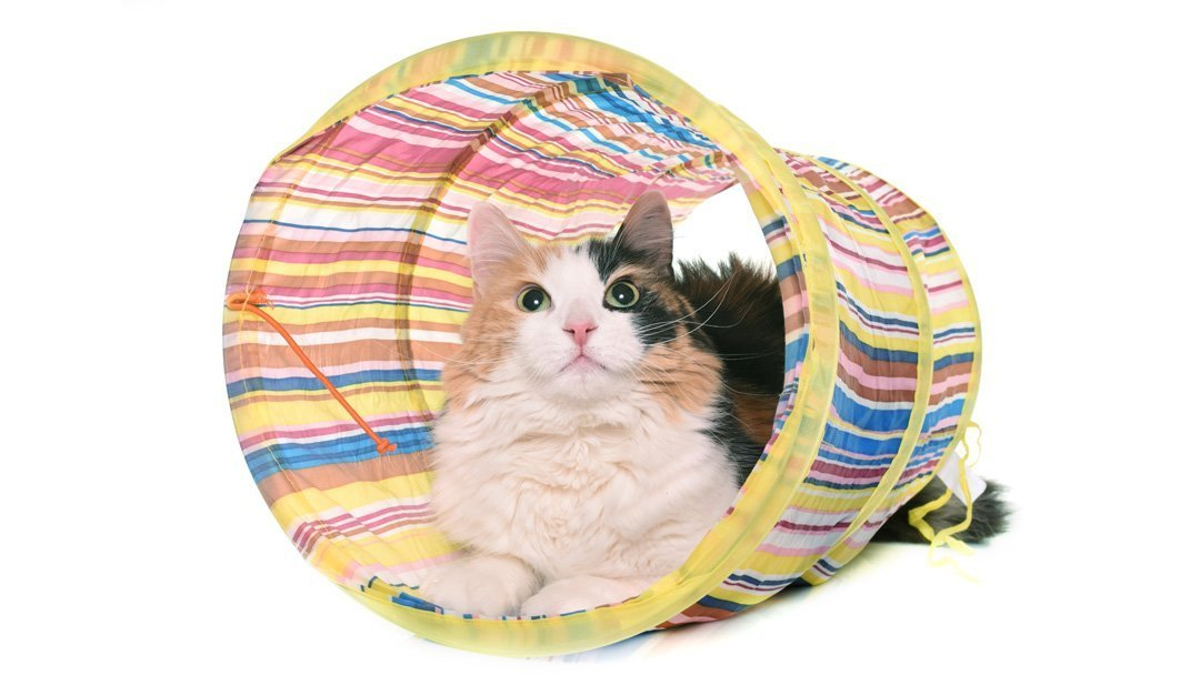 cat play tunnel with cat inside