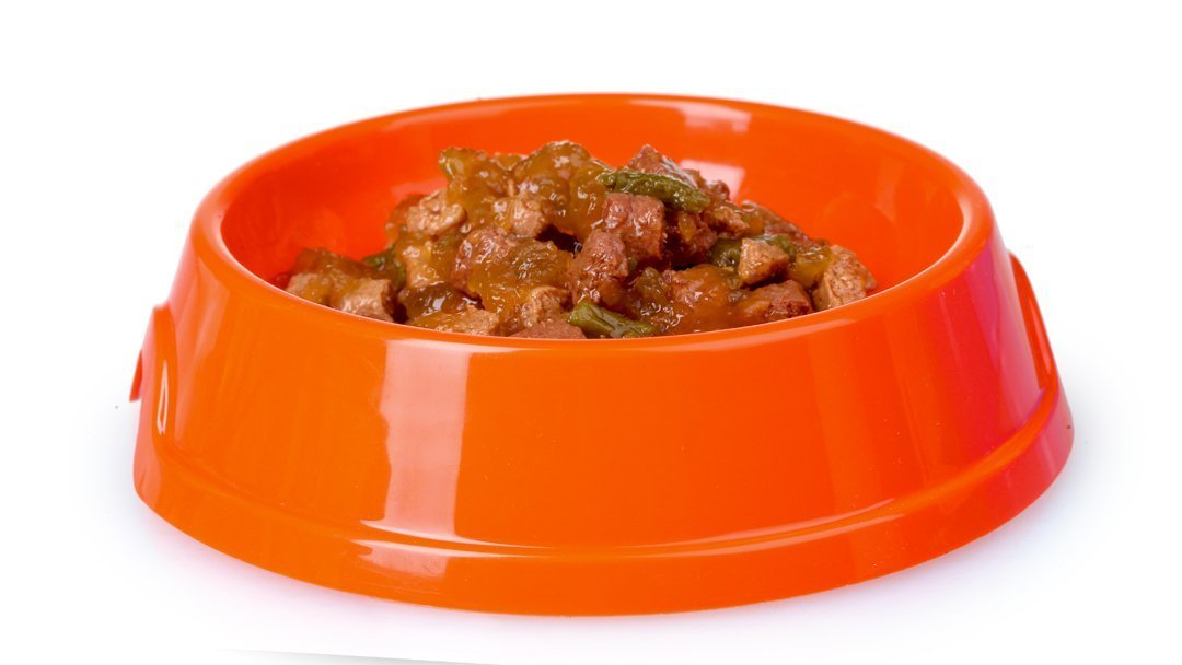 wet cat food for kittens