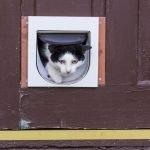 Cat on it's way thru a cat flap