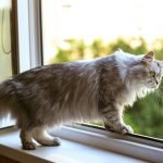 Cat in open window need cat proof screen