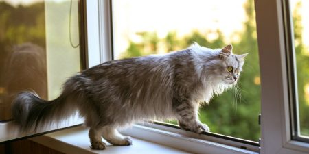 Best Cat Proof Window Guards and Screens