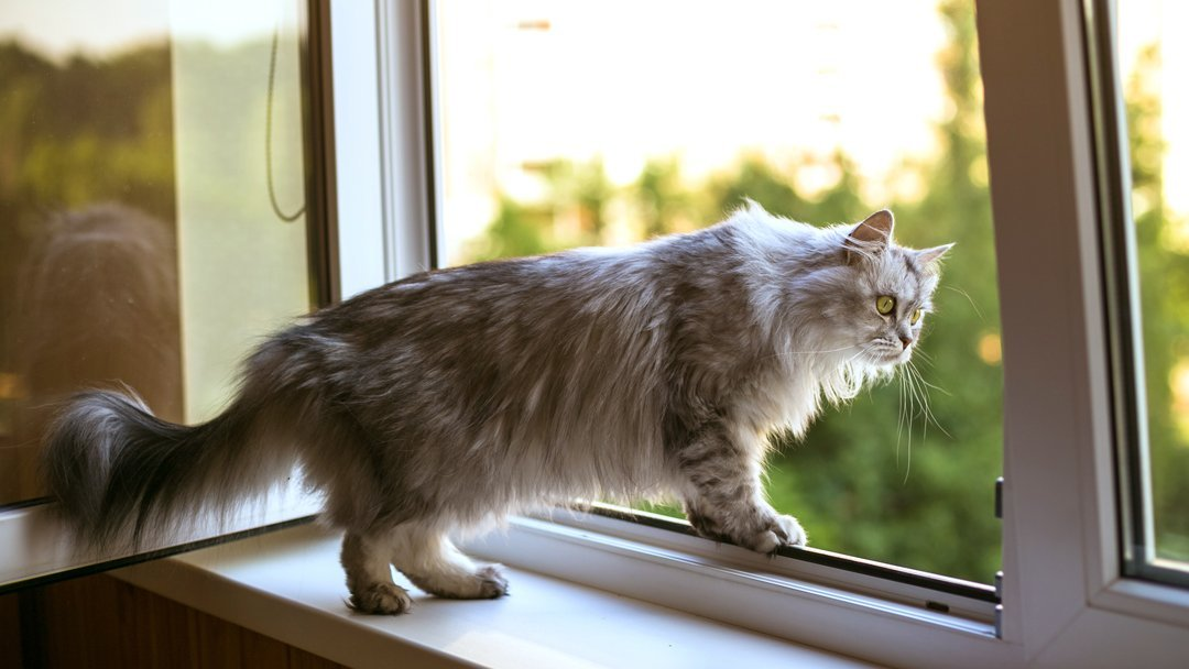 Best Cat Proof Window Screens and Balcony Nets for Cat Protection