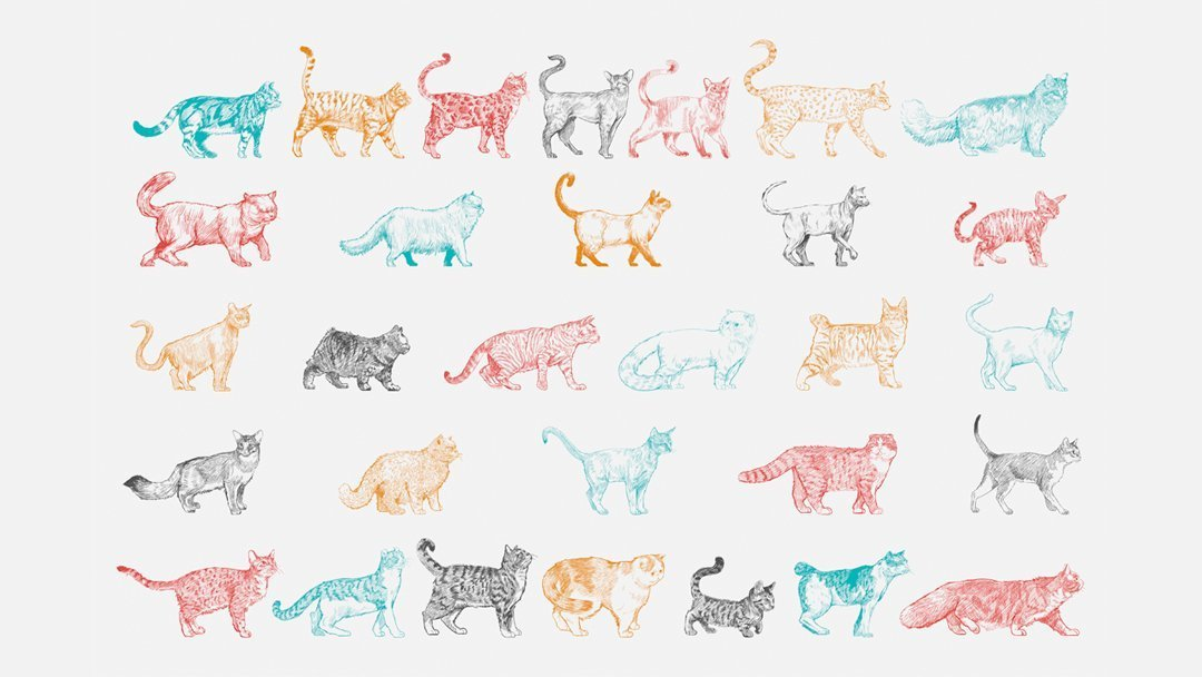 most popular cat breeds uk drawing
