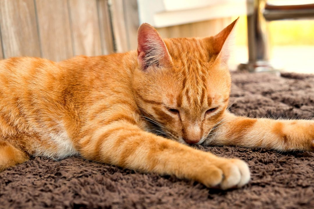 How To Stop Cats Scratching Your Carpet!