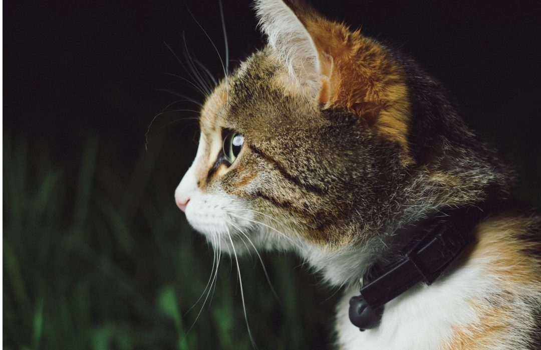 Best Cat Trackers