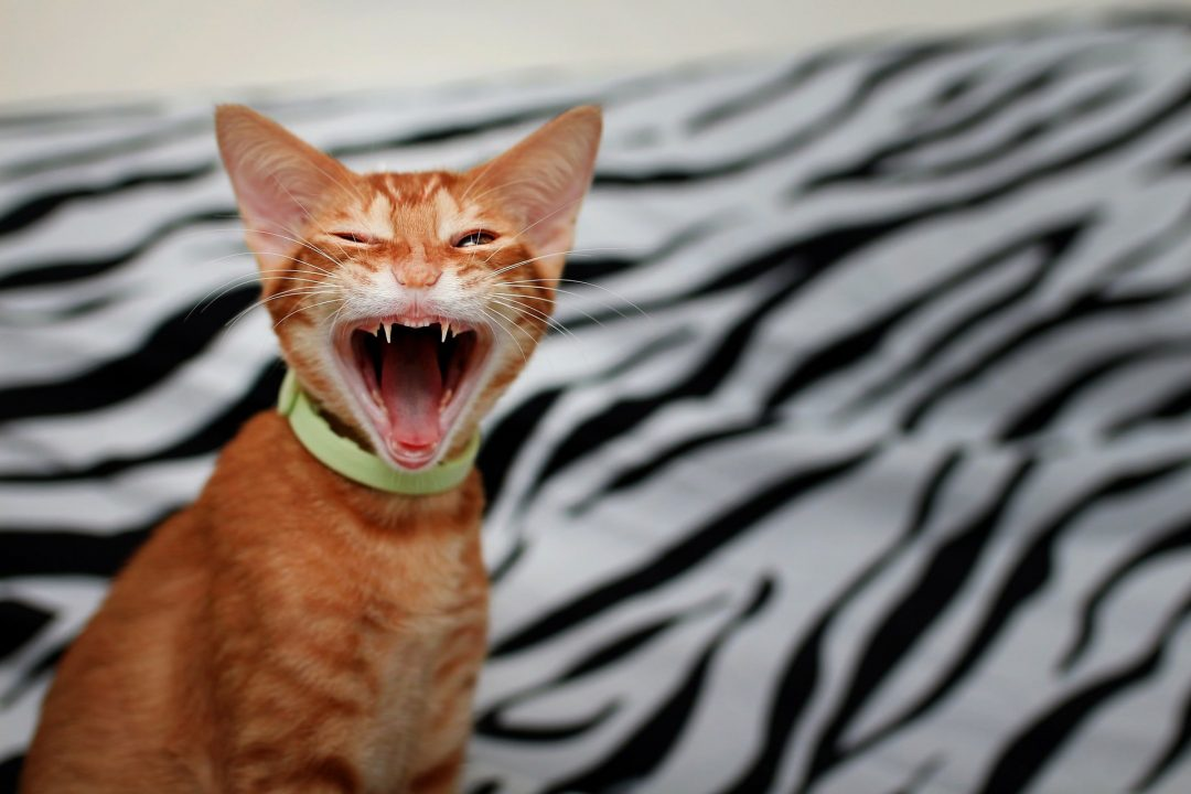 Best Hairball-Remedy-For-Cats