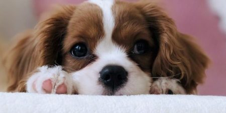 Bringing Your Puppy Home