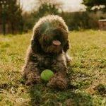 Best dog ball launcher