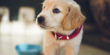 Best Puppy Training Pads