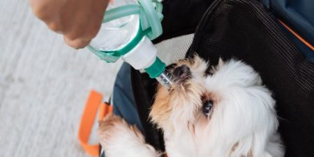 Best Dog Water Bottles