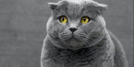 Best Cat Litter Bins