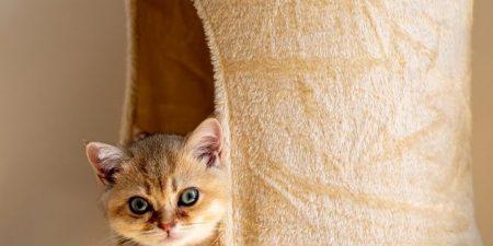 Best Cat Litter Box Furniture