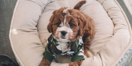 Best Orthopaedic Dog Beds