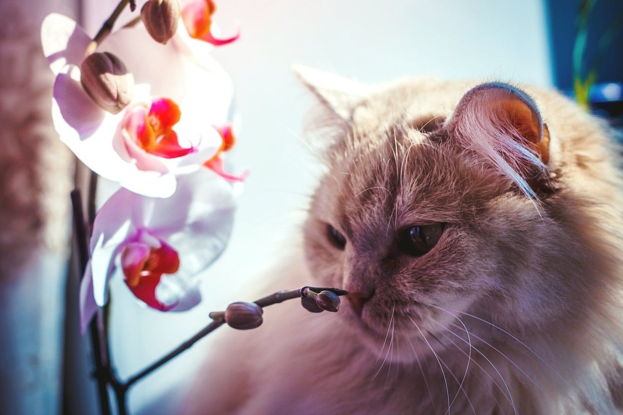 Are Orchids Poisonous To Cats?