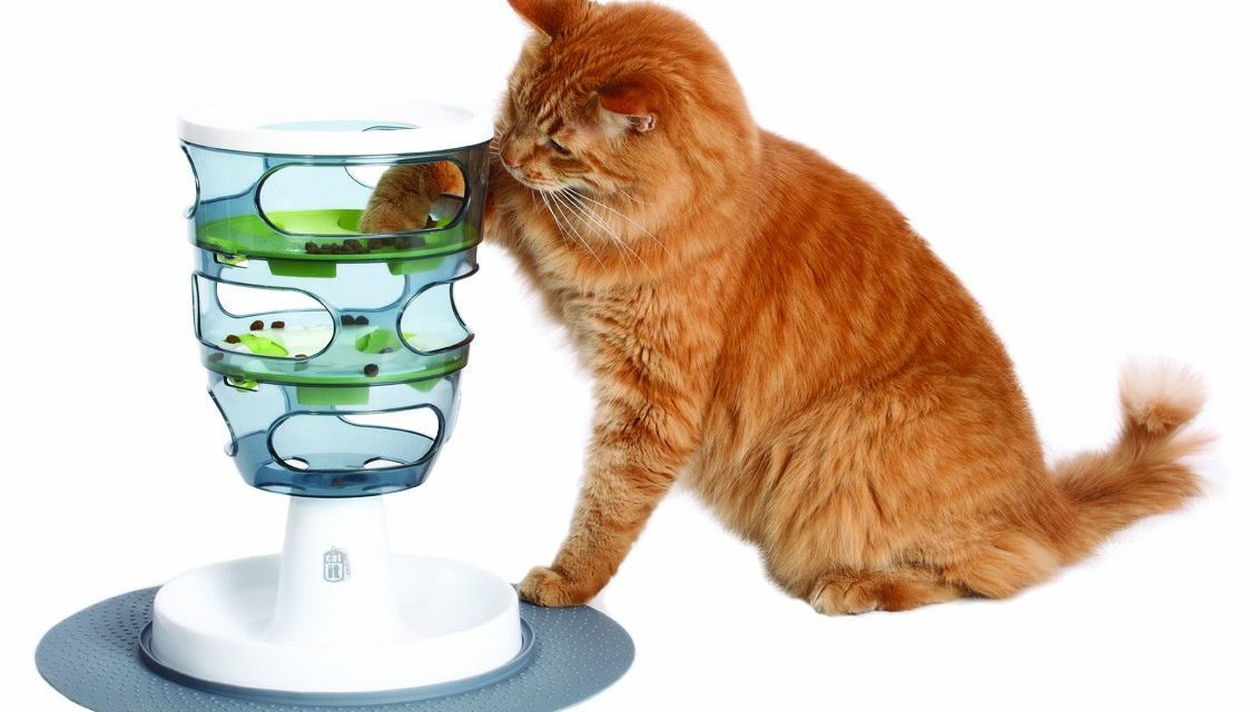 7 Best Interactive Cat Toys