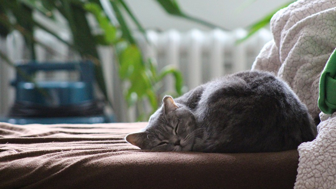 10 Best Gifts for British Shorthair Owners UK