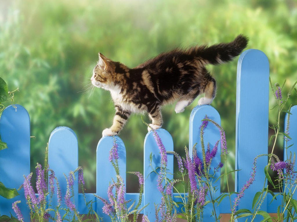 How to Stop Cats from Pooping in Your Garden!